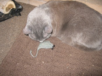 Hexapuff Knit Catnip Mouse