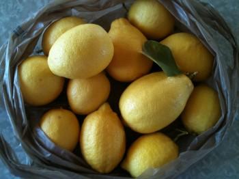 Fresh California Lemons